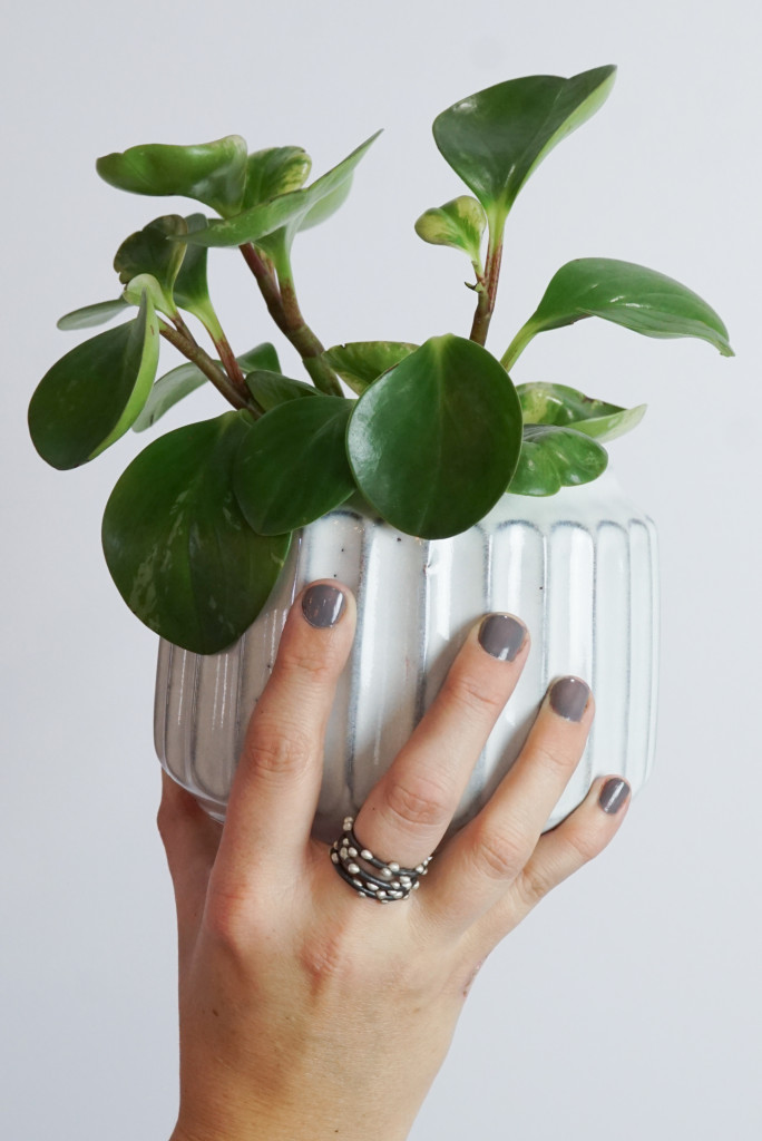 peperomia plant with handmade jewelry - mixed metal stacking rings